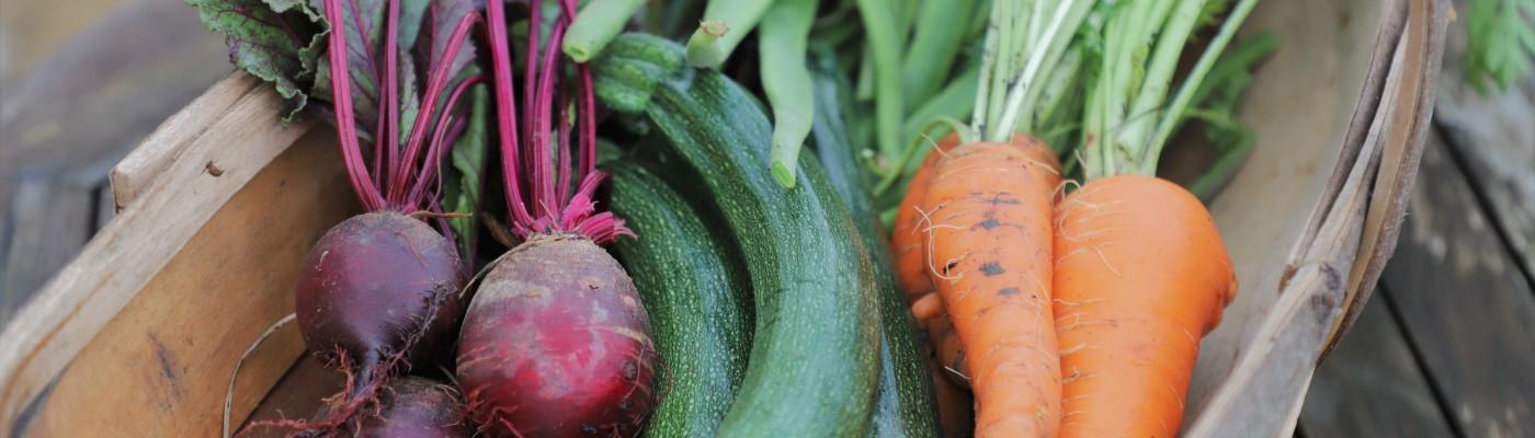 garden trug, vegetable trug