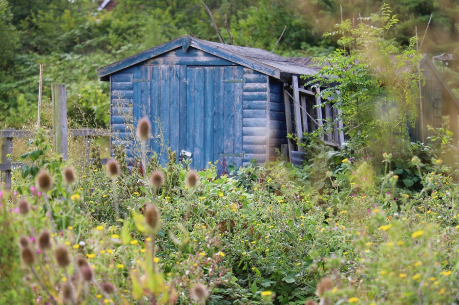 allotment shed, blue shed