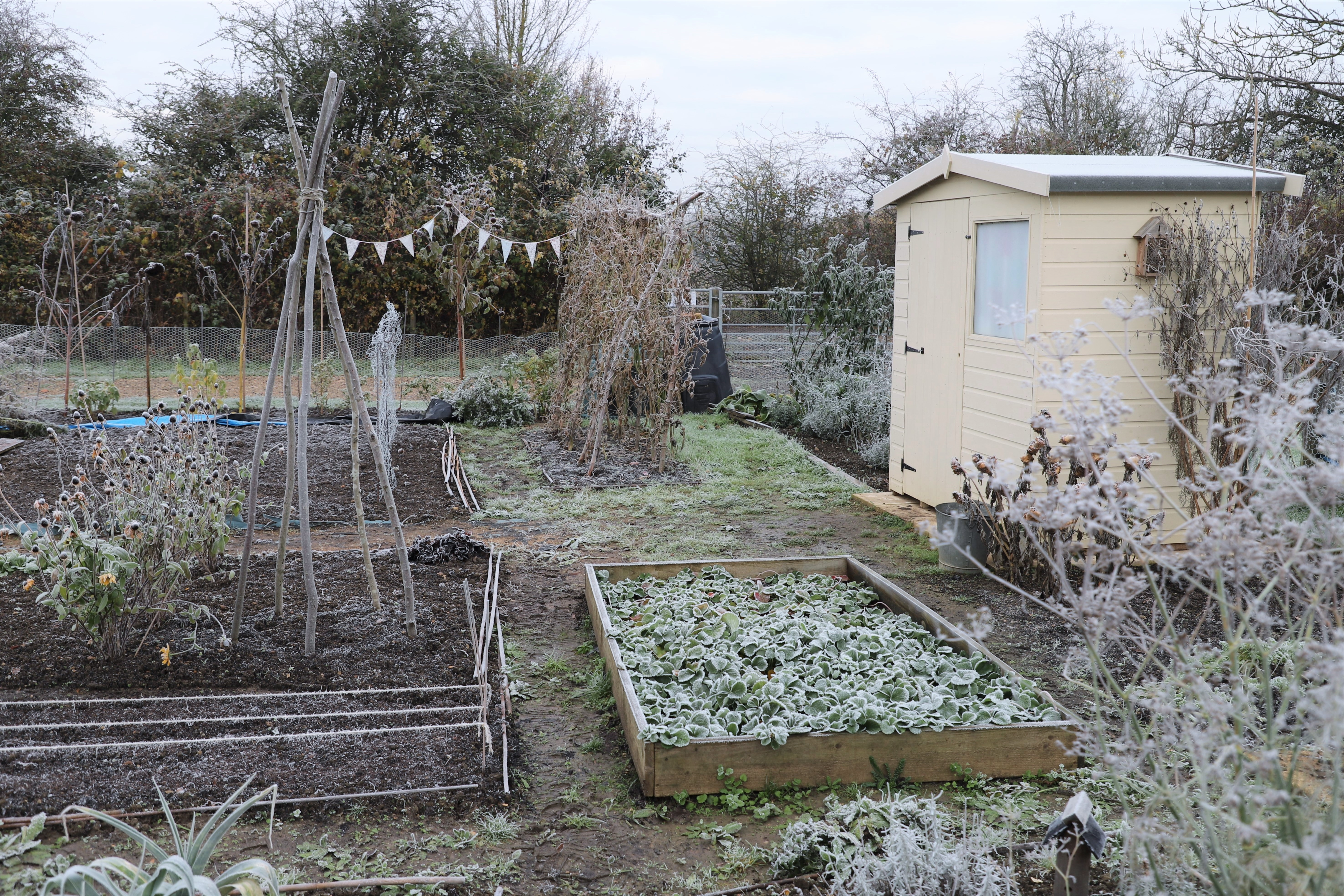 frosty allotment